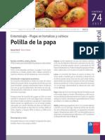 Ficha 74 Polilla de La Papa
