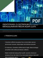 Identifikasi Clostridium Difficile Menggunakan Media Agar Ccfa