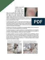 LOXOCELISMO Y OFIDISMO.docx