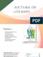 Estructura de los RAPG.pptx