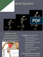 Skeletal System Lecture