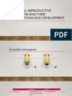 Animal Reproductive Organs and Their Functions and Development
