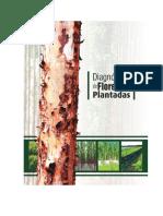 Relatorio_final_floresta_plantada.pdf