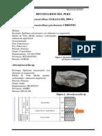 Bryozoarios Del Peru
