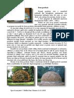 21_CCD_Dom geodezic.pdf