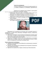 morfologia .docx