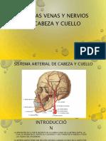 arteriasvenasynerviosdecabezaycuello-161101041353