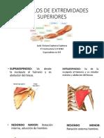 Musculos de Extremidades Superiores