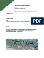 Informe Capsicum 2019-16