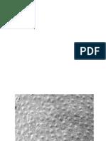 Subiecte sem I.pptx