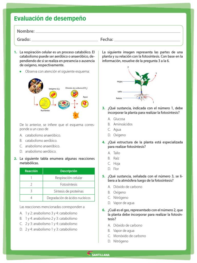Cual Es La Estructura Celular En La Que Se Realiza La..