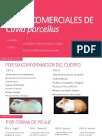 razas comerciales de cuyes.pptx