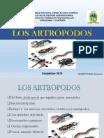 331891327-Artropodos