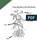 Planta_mm