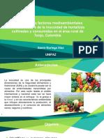industrial 2 hortalizas.pptx
