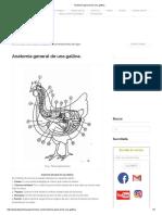Anatomía general de una gallina_.pdf