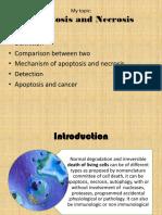 Apoptosis and Necrosis