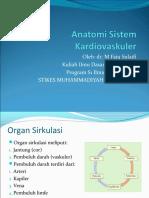 anatomisistemkardiovaskuler