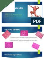 TEJIDO-MUSCULAR  Definitivo 6.0.pptx