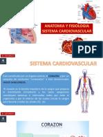Clase 09 - Morfofisiologia - Sistema Cardiovascular
