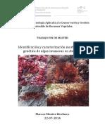 TFM_Marcos Montes.pdf