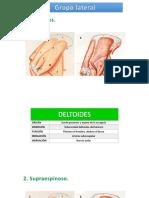 Musculos vet