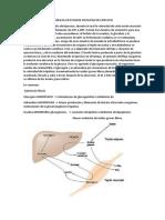 Interrelaciones Metabólicas en Estados Fisiológicos Ejercicio