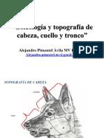 Osteología y Topografía de Cabeza, Cuello y Tronco. Alejandro Pimentel Ávila MV DiplME - PDF