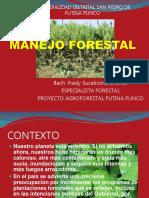 Manejo Forestal