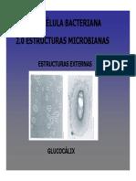 Capsula microbiana