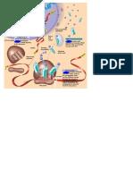 Ringkasan Sintesis Protein
