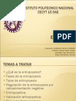eritrocitos