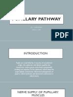 Pupillary pathway