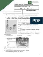 Ficha de avalCn6_Plantas.doc
