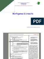 Licheni Morfogenesi&Crescita