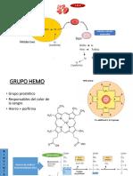 BIOSINTESIS DEL GRUPO HEMO.pptx