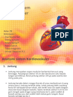 Kep. Kritis (Anatomi Kardiovaskuler)