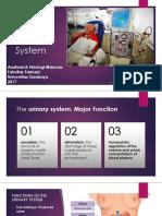 12)UrinarySystem