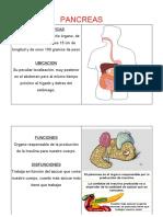 esquemas pancreas