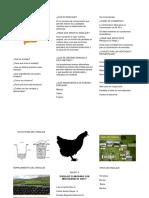 Ensilaje Con Mortalidad de Aves