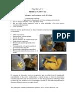 Informe de Frituas