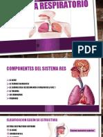 respiratorio sistemas