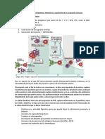 Sistema Inmune Adaptativo