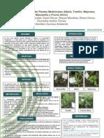 poster plantas medicinales