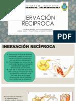 INERVACION RECIPROCA