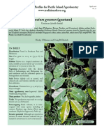 Gnetum-gnetum.pdf