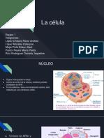 0 Fisio Celula