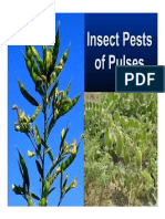 Pests of Pulses in fields