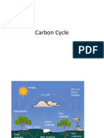 5.Carbon Cycle.pptx
