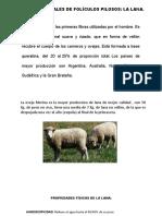 LANAS-Y-PELOS.pptx